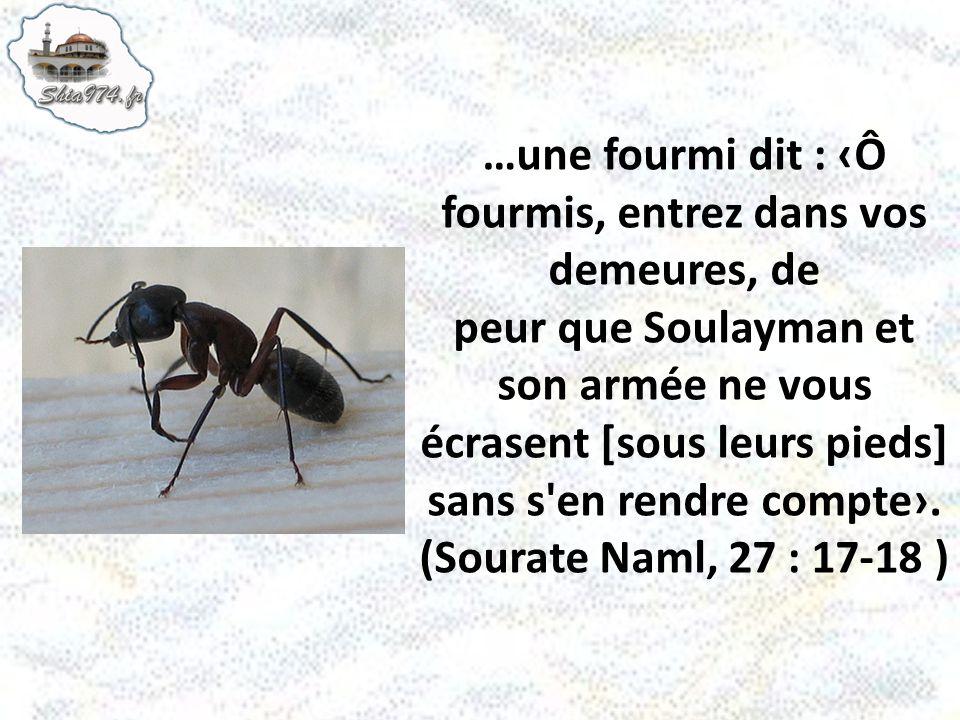…une fourmi dit : ‹Ô fourmis, entrez dans vos demeures, de peur que Soulayman et son armée ne vous écrasent [sous leurs pieds] sans s en rendre compte›.